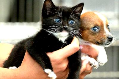 Микроскопия кошек и собак метро Тушкинская