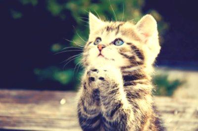 Перхоть у кошки лечение