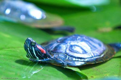 Лечение экзотических животных метро