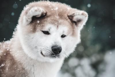 Глисты у собак лечение метро Тушинская
