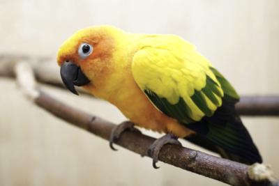 Лечение птиц метро Тушинская